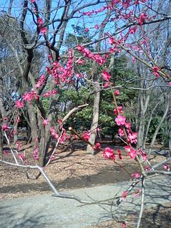 早春の砧公園