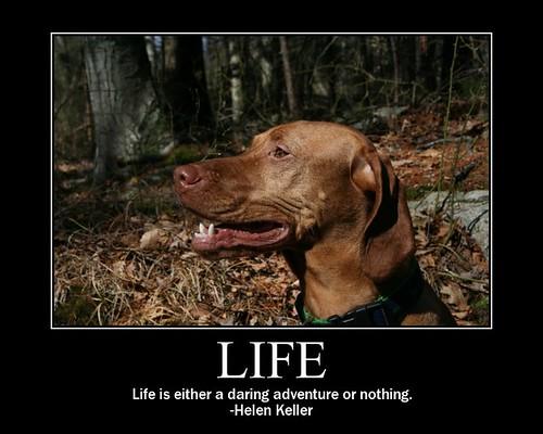 Motivational Dog