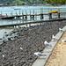 Small photo of Akaroa harbour