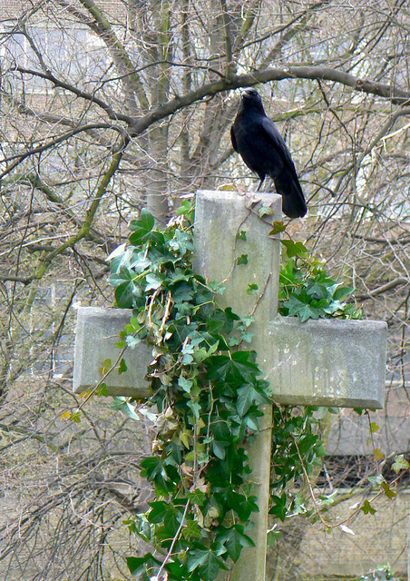 Crow on Brompton cemetery cross