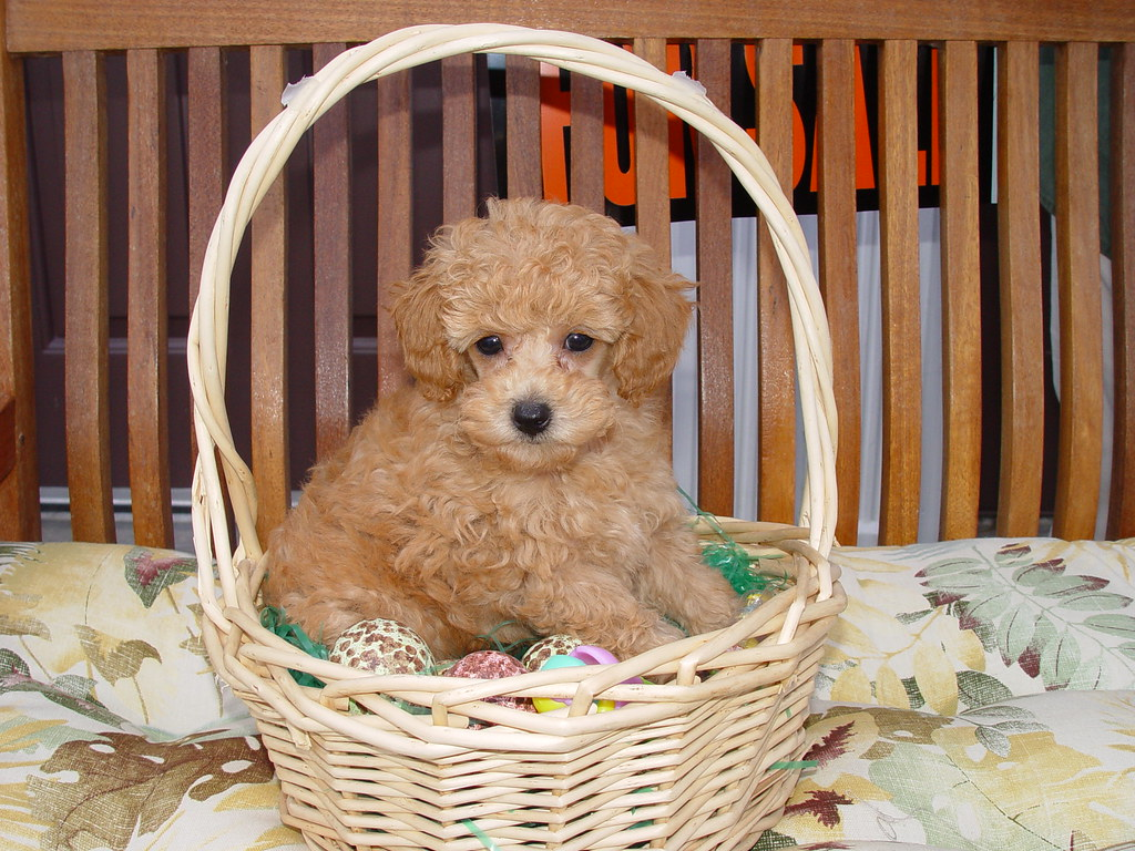 Basket full of trouble