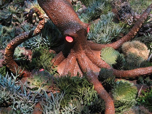 Octopus 39 S Garden Flickr Photo Sharing