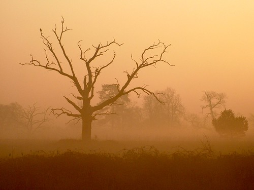 orange mist lake sunrise dawn amber buckinghamshire deadtree hazy slough berkshire kevday langley langleycountrypark chtk