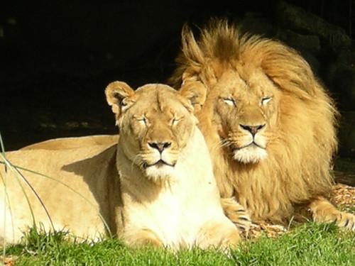 гороскоп на лев любовный для одиноких