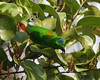 Senegal Parrots Feed And Health And Nutrition
