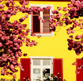 Yellow house with Cherry Tree