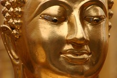 art, ancient history, temple, sculpture, head, close-up, gautama buddha, statue,