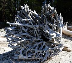 carving(0.0), art(0.0), root(0.0), sculpture(0.0), scrap(0.0), iron(0.0), driftwood(1.0), wood(1.0), tree(1.0),