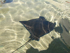 A ray, not being stroked