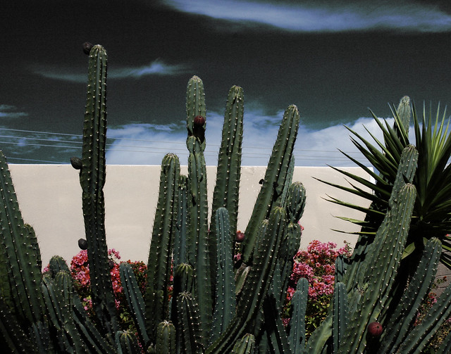 Palm Trees and Cactus:  Wall and Cactus