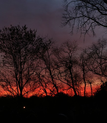 trees sunset sky silhouette 50mm 30d canonef50mmf14usm canon30d chrislin christopherlin