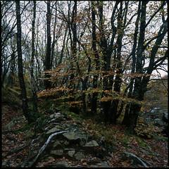 Les Gorges du Corong - St Nicodéme (22) / 2006
