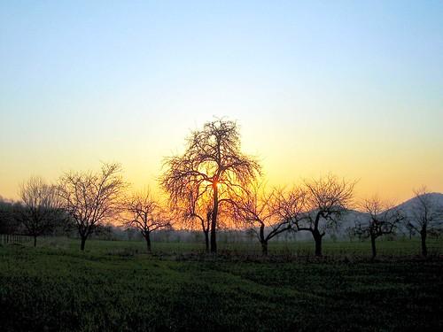 trees sunset germany deutschland sonnenuntergang bäume eschwege nordhessen thebiggestgroup wanfriedaue leuchtberge