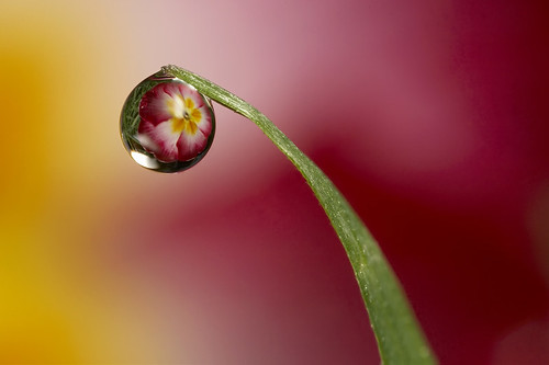 dewdrop refraction #2