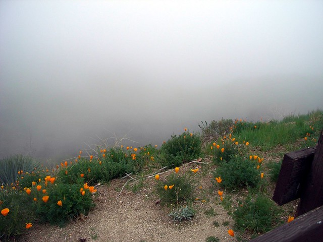 Flowers and Fog