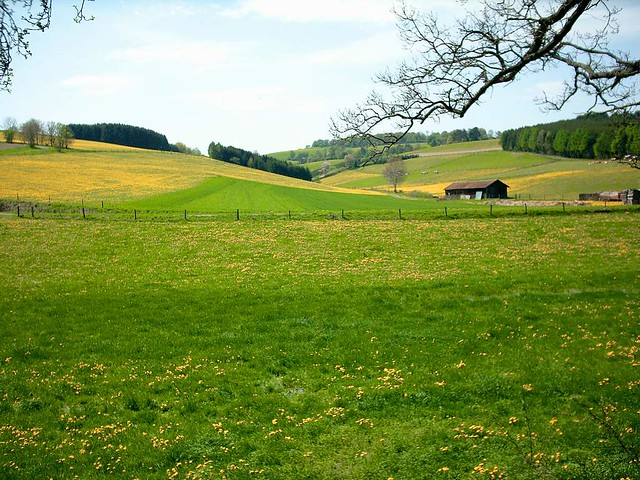 Spring meadow in Germany