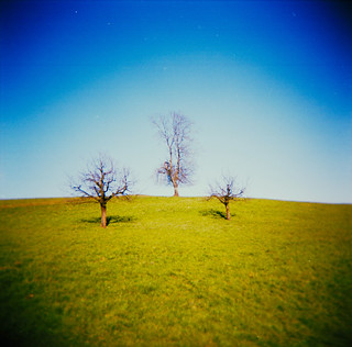 Three Trees (explored)