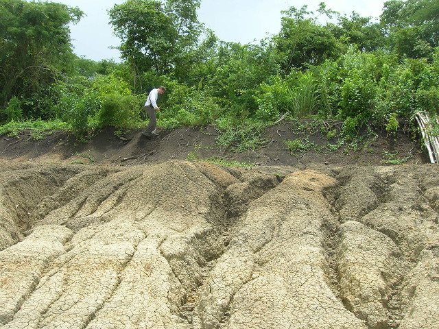 Black cotton soil flickr photo sharing for Black garden soil