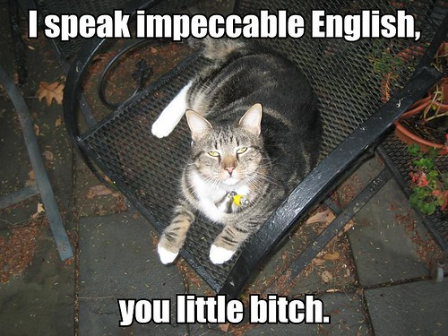 Lolcat? I'll give you a lolcat.