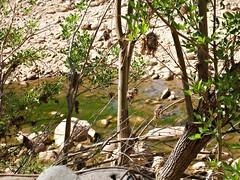 Beaver Creek (1)