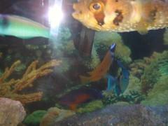 desegragated school of fish
