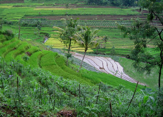 Terrace farming in java flickr photo sharing for Terrace cultivation