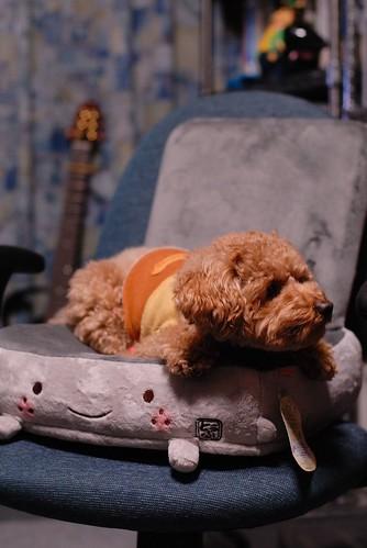 ChuChu on the chair - 無料写真検索fotoq