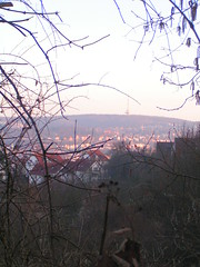 view of the town through shrubbery
