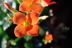 Flower gardens, Pickens County