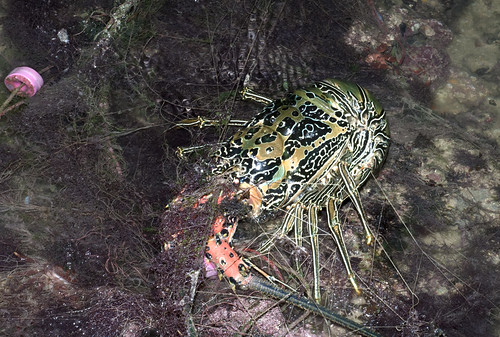 Threats to Singapore marine life: drift nets