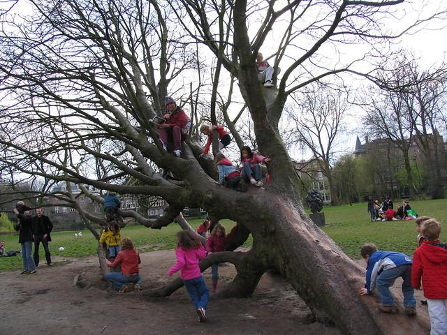 tree climbing day.