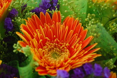 annual plant, flower, yellow, floral design, plant, gerbera, macro photography, wildflower, flora, floristry, chrysanths, petal,