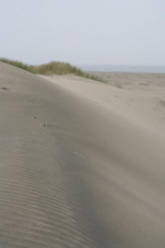 limantour, estero, estuary, point reyes, beach IMG_0456