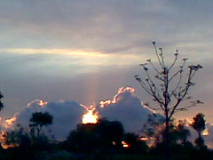 wildfire(0.0), flower(0.0), cumulus(1.0), cloud(1.0), sunset(1.0),