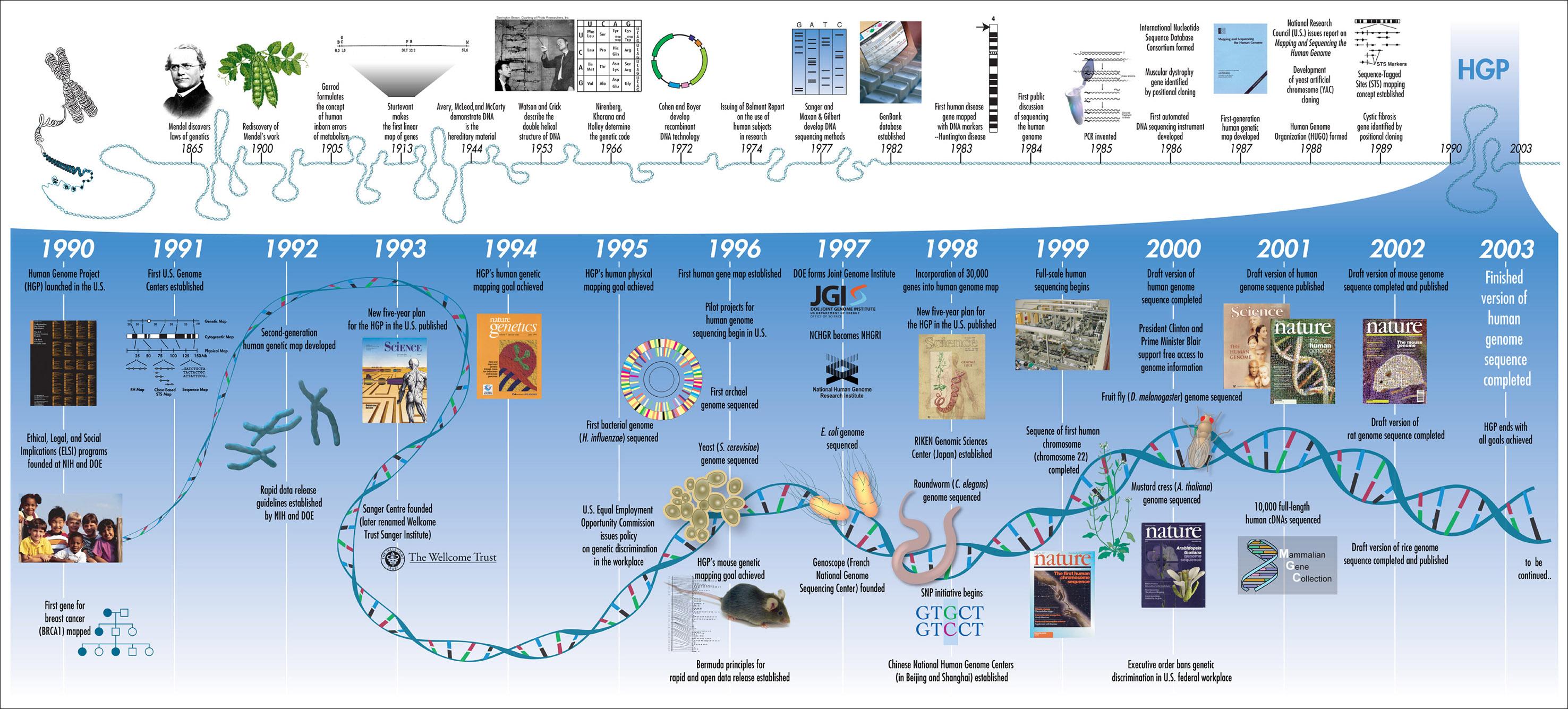 El genoma humano #infografia #infogrpahic | Las otras ...