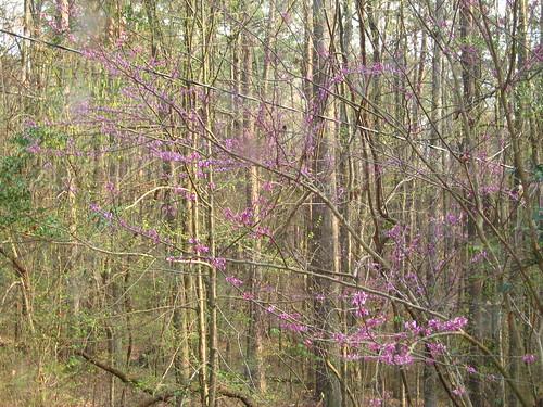 flowers mississippi rooseveltstatepark