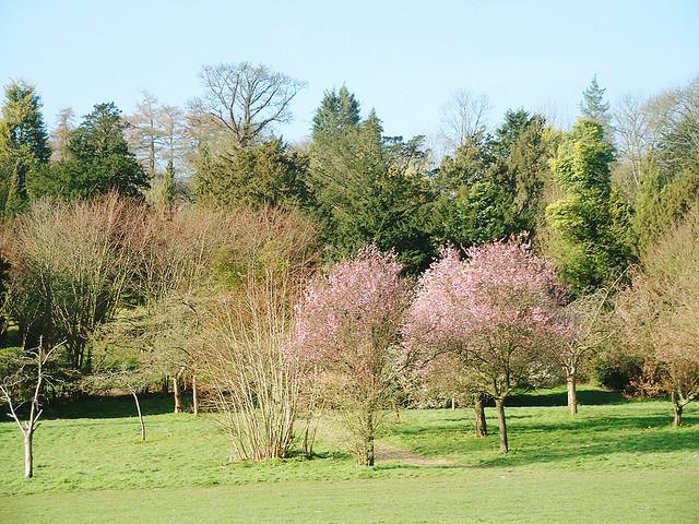 park spring blossom - photo #5