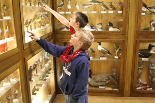 Cub Scouts in Simpson Bird Room