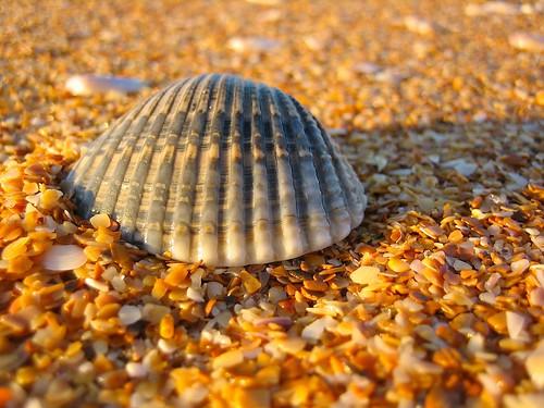 Sunny Shell