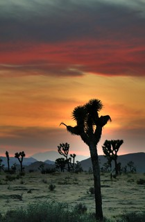 Joshua Tree HDR