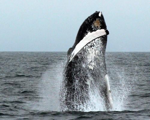 whale_1