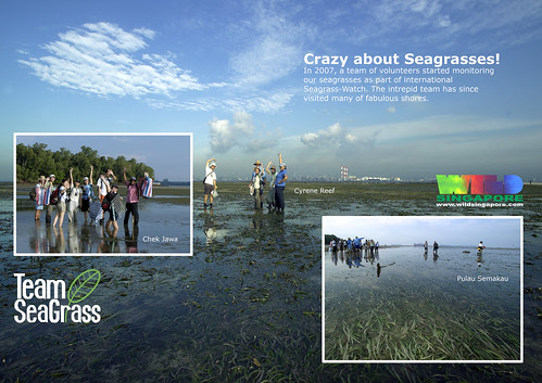 A4 Poster: TeamSeagrass--crazy about seagrasses!