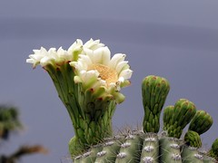 The Glory of Spring in Tucson