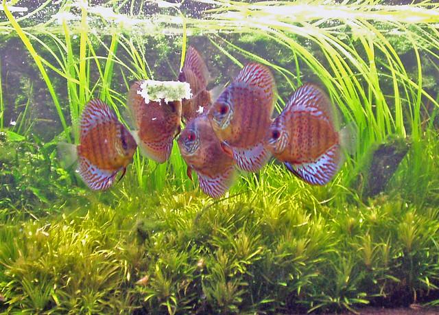 200l aquarium 28 01 2007 flickr photo sharing for Aquarium 200l
