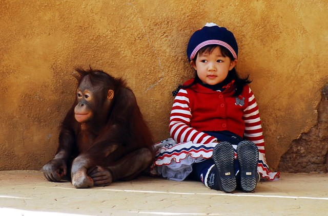 Everland orangutan & cute girl