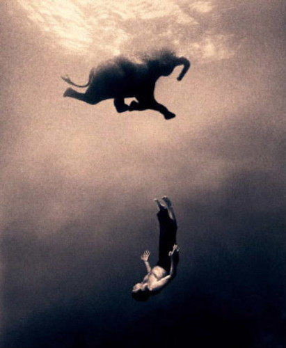 gregory colbert-elephant swimming