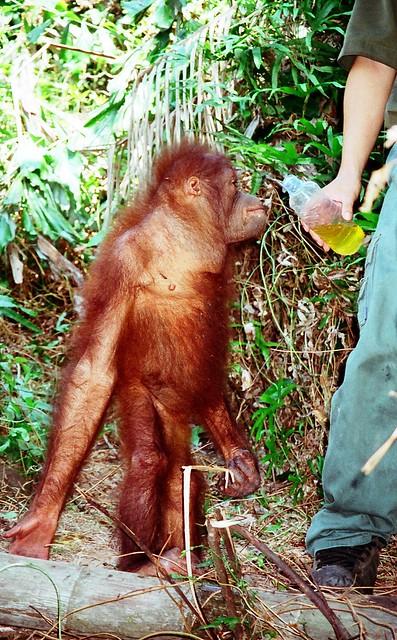 Rasa Ria Resort - Orang Sanctuary