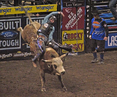 animal sports, rodeo, event, sports, bull riding,