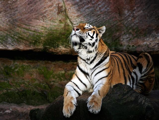 Tierpark19