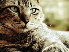 ¿Cuántos huesos tiene un gato?